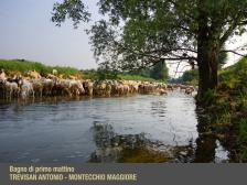 """II° Trevisan Antonio di Montecchio Maggiore """"Bagno di primo mattino"""""""